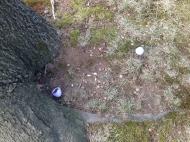 Easter egg hunt...for the squirrel